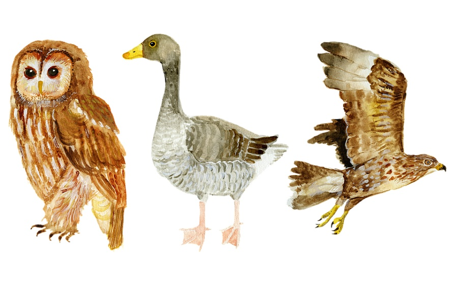 grafika rzy ptaki- od lewej strony: sowa, gęś, jastrząb