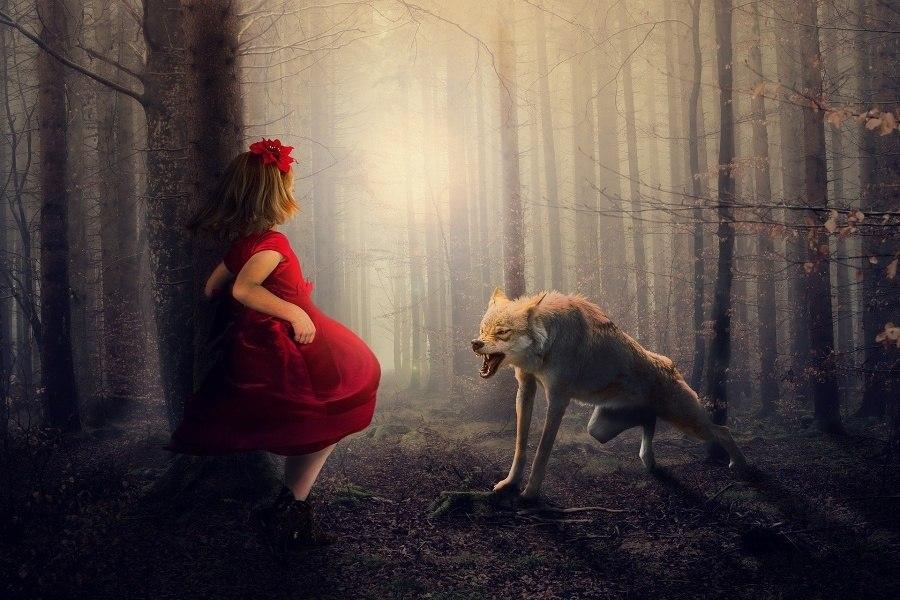 Na tle zamglonych, szarych drzew widoczna jest dziewczynka w czerwonym płaszczu odwrócona tyłem do widza, na przeciwko niej znajduje się warczący wilk, kierujący swoje kły w stronę dziewczynki