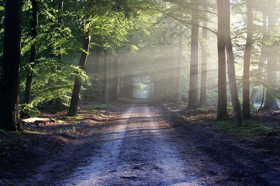 leśna droga, która jest metaforą karate jako ciągłej drogi w dążeniu do doskonałości.