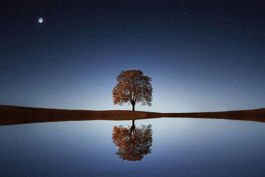 zdjęcie przedstawia drzewo nocną porą, które odbicie widać w akwenie.