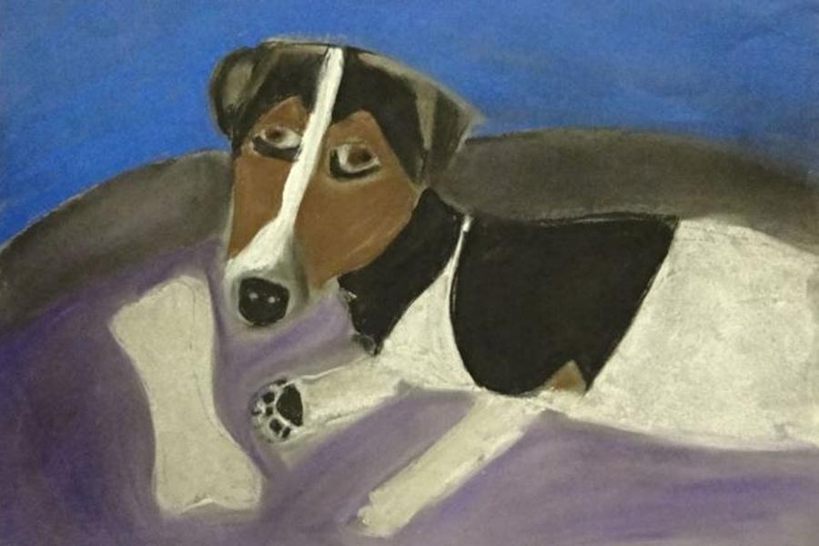 na fioletowym posłaniu leży pies w biało-brązowo-czarne łaty, a przed nim widać białą kość