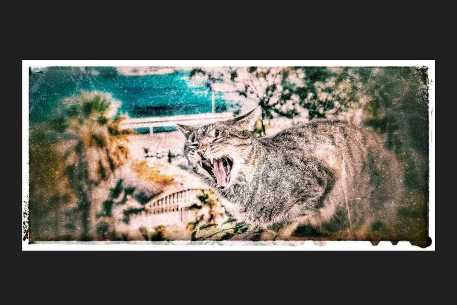 fotografia z licznymi defektami przedstawiająca ziewającego kota
