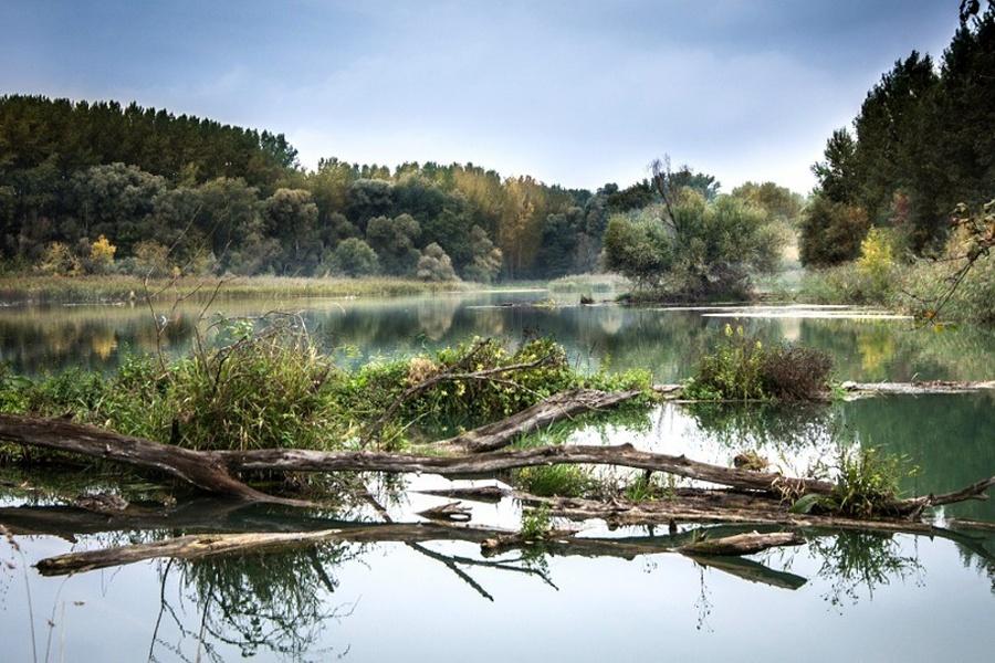 Pnie drzew zwalone do spokojnej rzeki szeroko płynącej wśród drzew, w oddali lekko mglistej