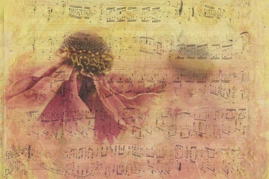Zdjęcie przedstawia fragment zapisu nutowego utworu muzycznego, a na nim przekwitający kwiat jeżówki purpurowej