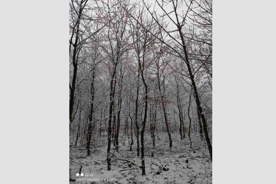 zdjęcie zimowego lasu
