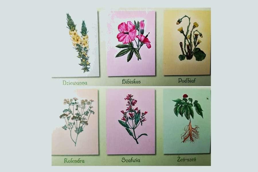 kolaż sześciu kwiatów ziołowych
