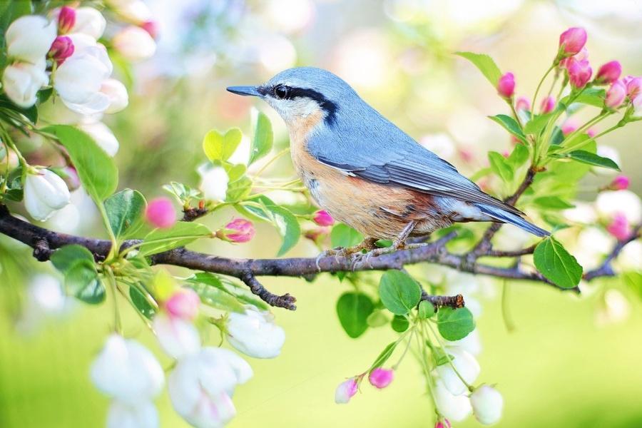 kolorowy ptak na gałęzi