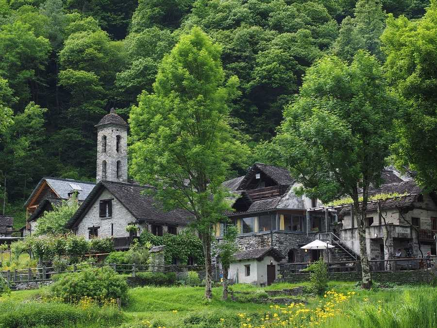 stare budynki na tle zieleni