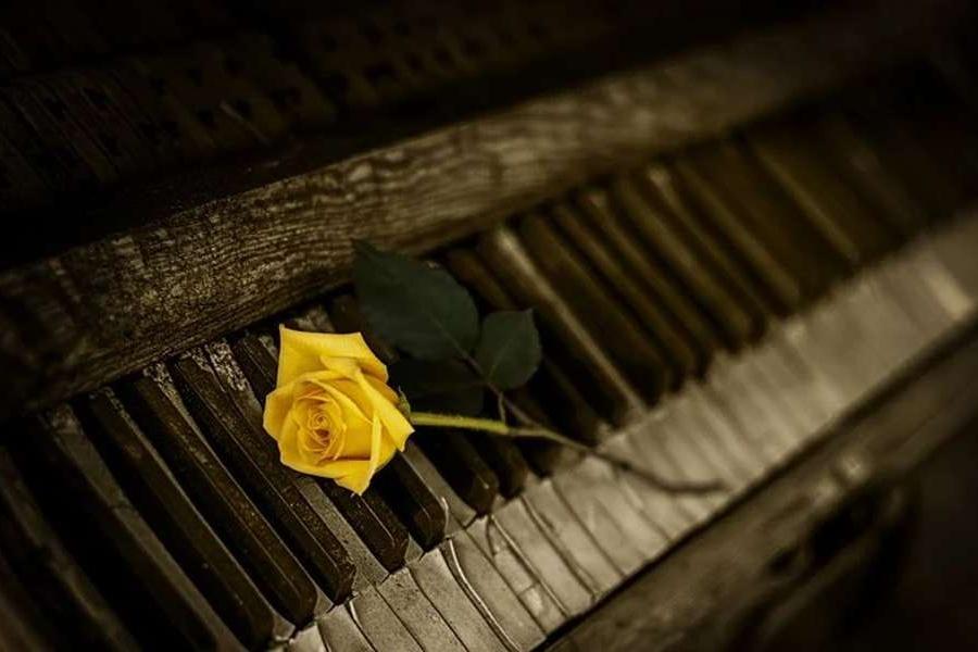 żółta róża na tle klawiszy pianina