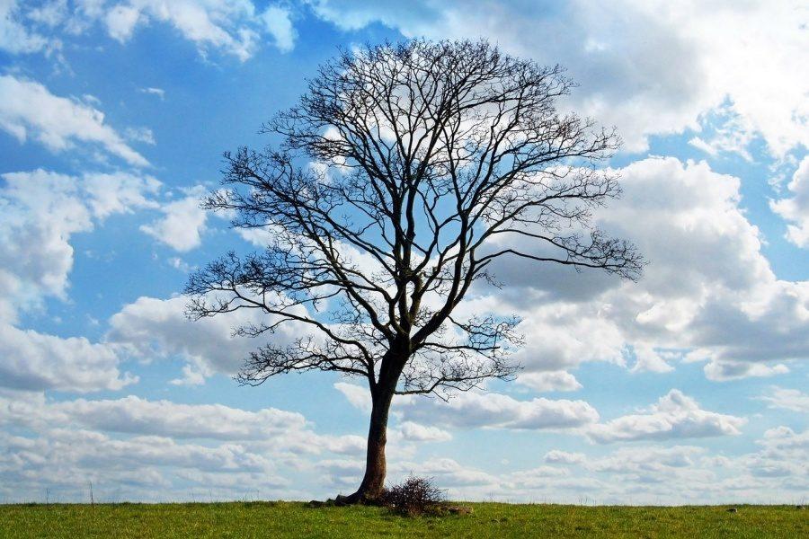 Samotne, bezlistne drzewo, rosnące na zielonej trawie na tle błękitnego nieba przetykanego białymi chmurami