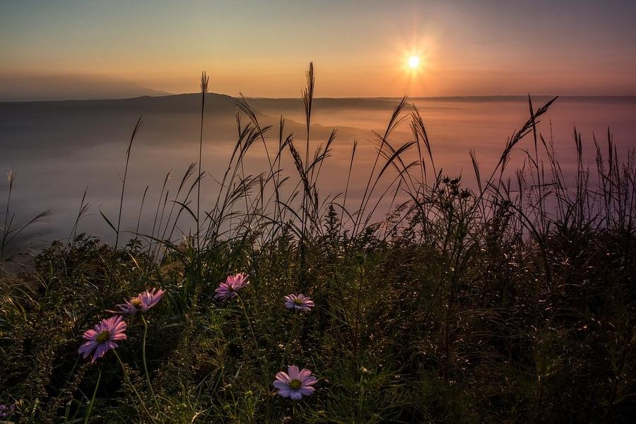 Zdjęcie przedstawia łąkę o wschodzie słońca, w tle mgła