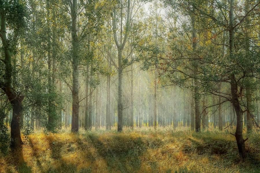 Las w słońcu